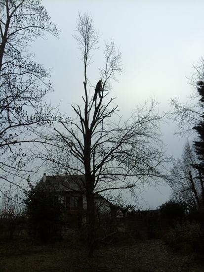 Élagage, taille, arbres, Les Jardins du Buis, 73, 38, 01, Paysagiste, Entretien extérieur, pont de Beauvoisin