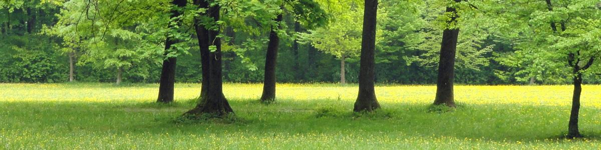 Les jardins du Buis 73330 Le Pont de Beauvoisin, Domessin - David Lopes paysagiste